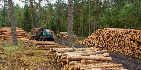 FORESTOINDUSTRIA Nuevo escenario para proyectos de inversión en Misiones basados en recursos forestales