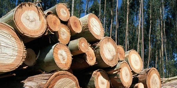 INTERNACIONALLa industria papelera española apuesta a la certificación forestal