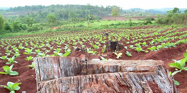 DesarrolloSostenible bosquesw